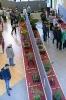 Der Bonsaiarbeitskreis Weserbergland richtete 2017 die BCD Bundesversammlung im Weserbergland Zentrum in Hameln aus. Die [SHOHIN PASSION] 2017 findet diesmal im Rahmen der Bundesversammlung des Bonsai-Club Deutschland in Hameln im Weserbergland Zentrum statt. Fotos: Anke Sundermeier - foto&grafik_23