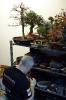 Der Bonsaiarbeitskreis Weserbergland richtete 2017 die BCD Bundesversammlung im Weserbergland Zentrum in Hameln aus. Die [SHOHIN PASSION] 2017 findet diesmal im Rahmen der Bundesversammlung des Bonsai-Club Deutschland in Hameln im Weserbergland Zentrum statt. Fotos: Anke Sundermeier - foto&grafik_61
