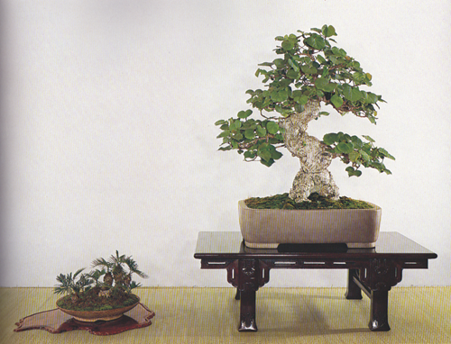 Okinawa BONSAI ART 145 03