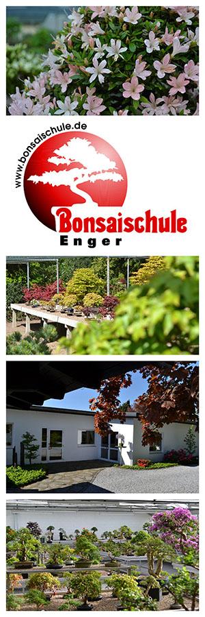 Bonsaischule Enger
