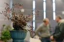 Der Bonsaiarbeitskreis Weserbergland richtete 2017 die BCD Bundesversammlung im Weserbergland Zentrum in Hameln aus. Die [SHOHIN PASSION] 2017 findet diesmal im Rahmen der Bundesversammlung des Bonsai-Club Deutschland in Hameln im Weserbergland Zentrum statt. Fotos: Anke Sundermeier - foto&grafik_46