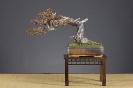 Noelanders Trophy 2010_28