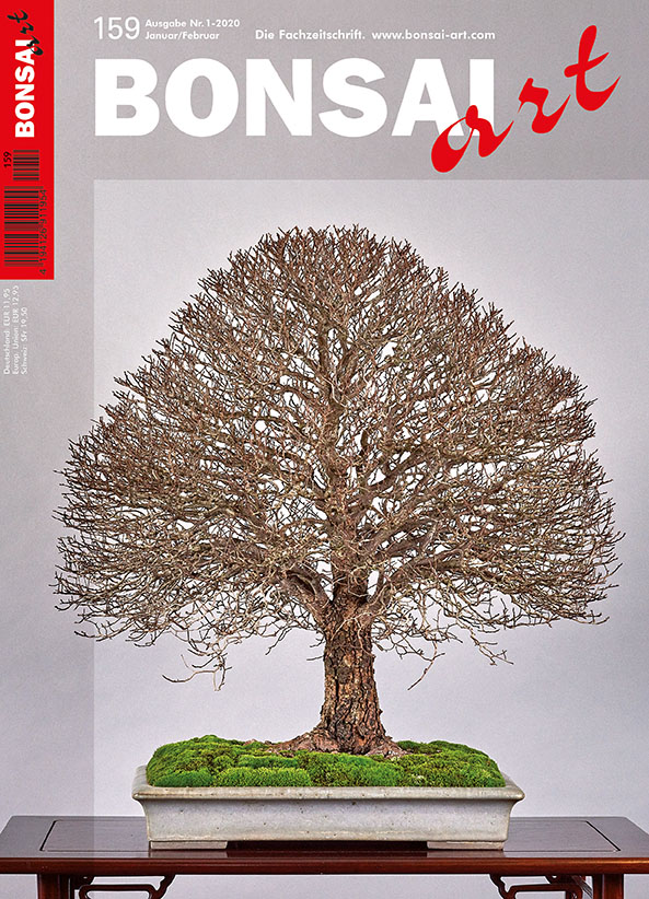BONSAI ART 159
