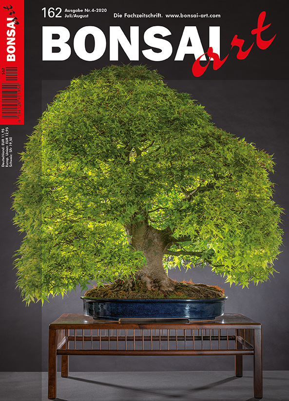 BONSAI ART 162