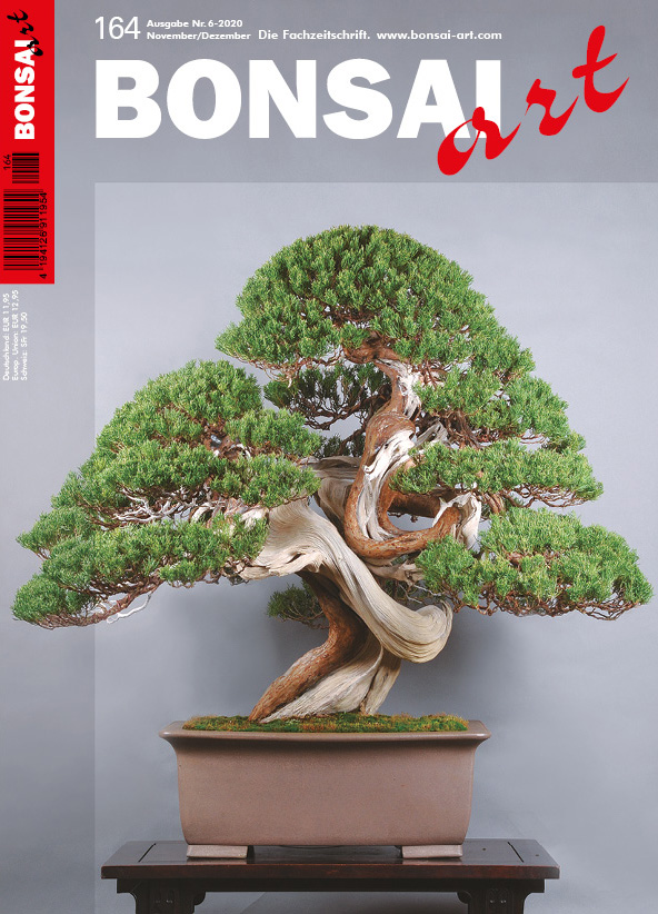 BONSAI ART 164